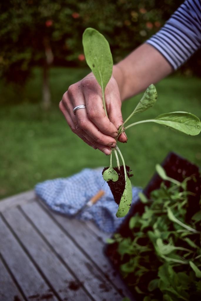 Module salad plant, Do Grow