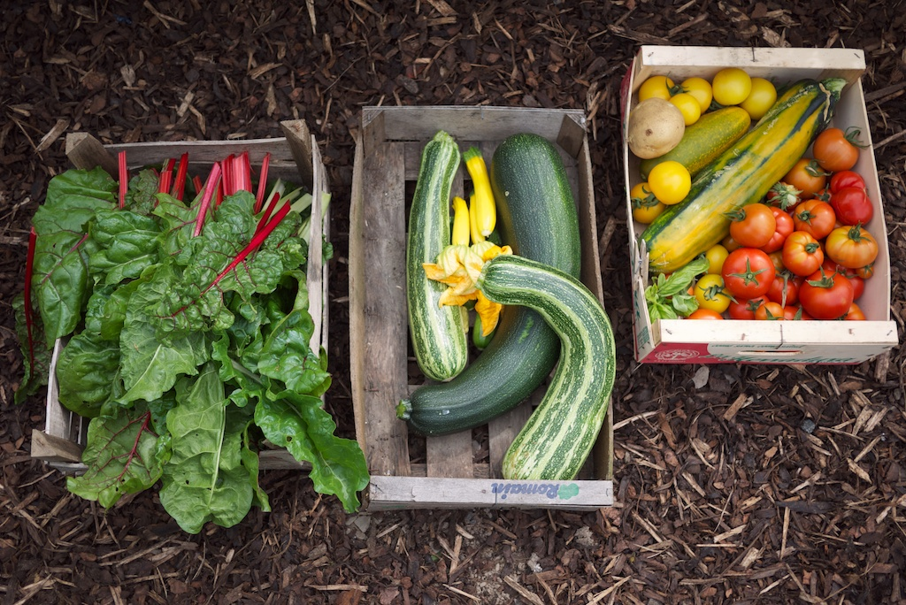 Vegetable boxes, Do Grow