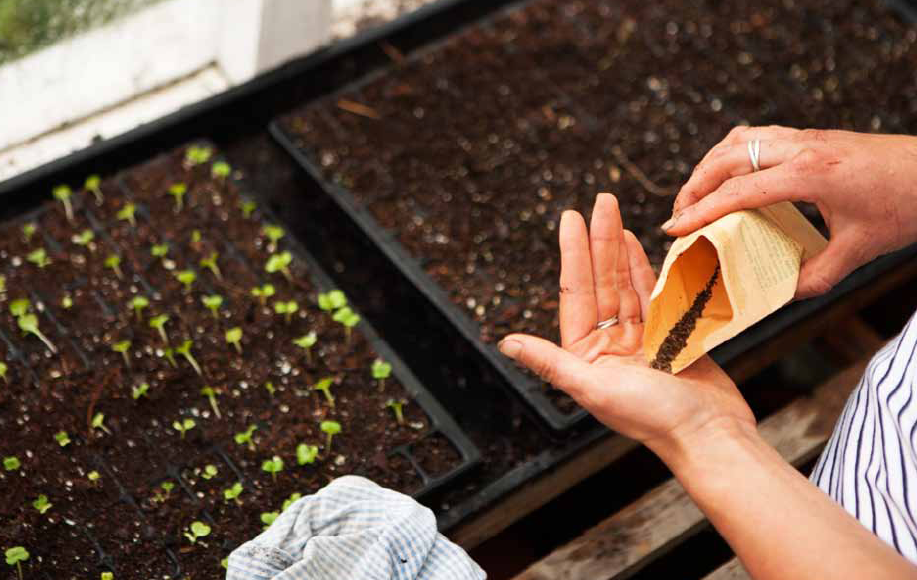 Sowing seeds, Alice Holden, Do Grow