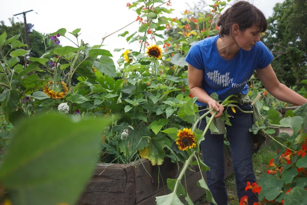 Gardening, Alice Holden, Do Grow